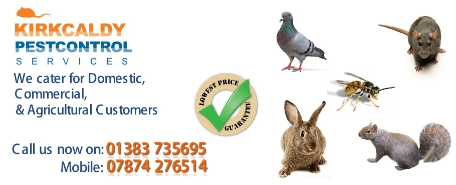Pest Control Mitchelston Industrial Estate Kirkcaldy