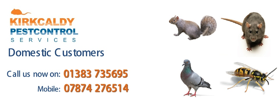 Pest Control West Wemyss